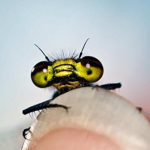 http://phototrend.fr/wp-content/uploads/2008/11/insecte-doigt.jpg
