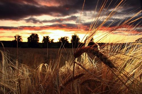 bruiach-barley-fire