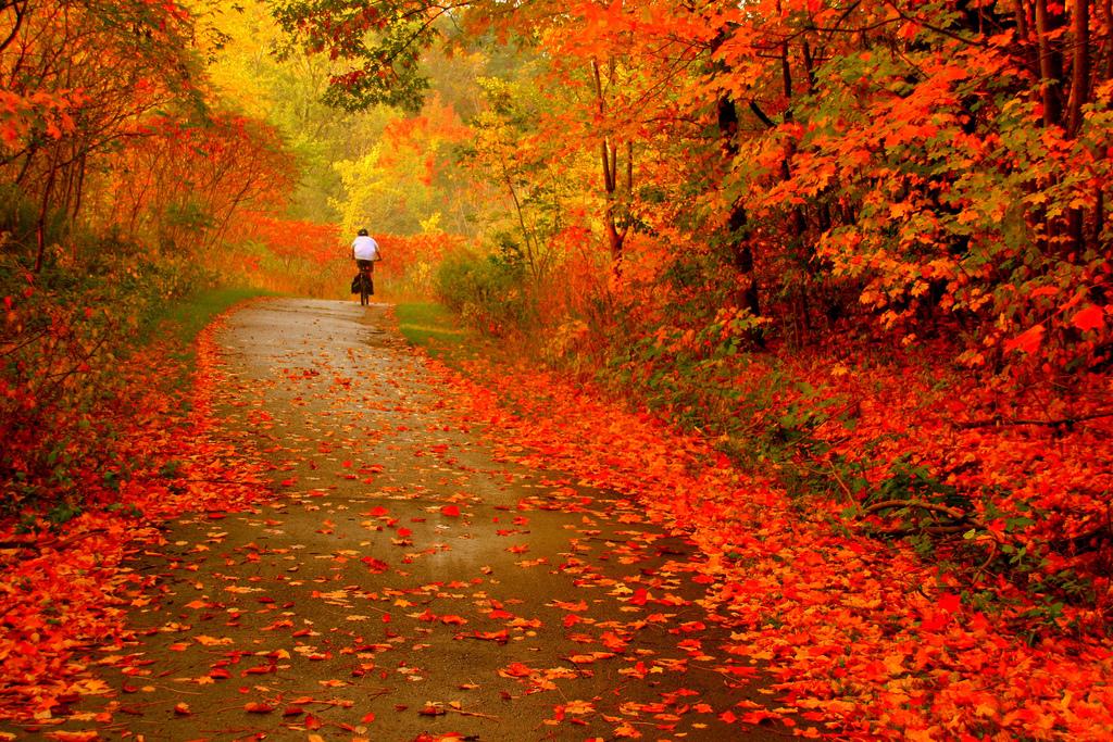 Technique photo : nos conseils pour réussir ses photos d'automne