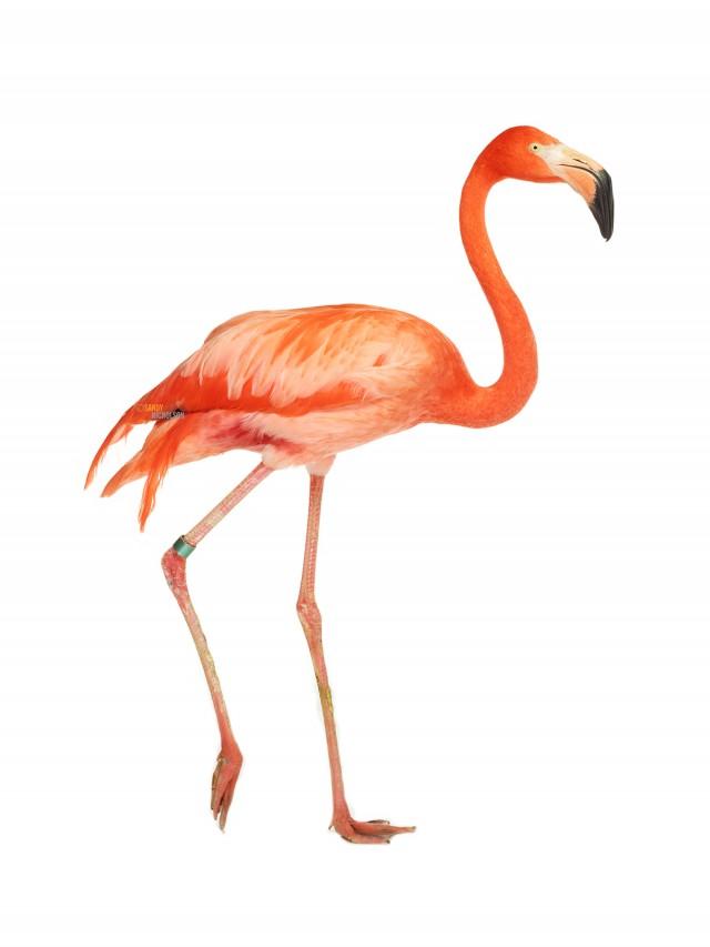 121217_ZOO_Flamingo-86