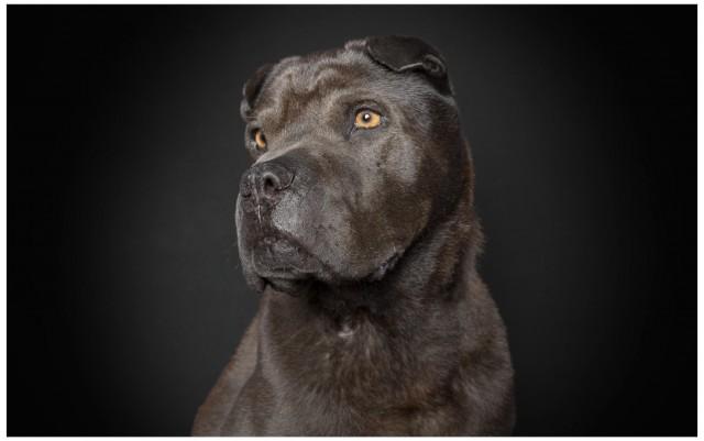 Dog08