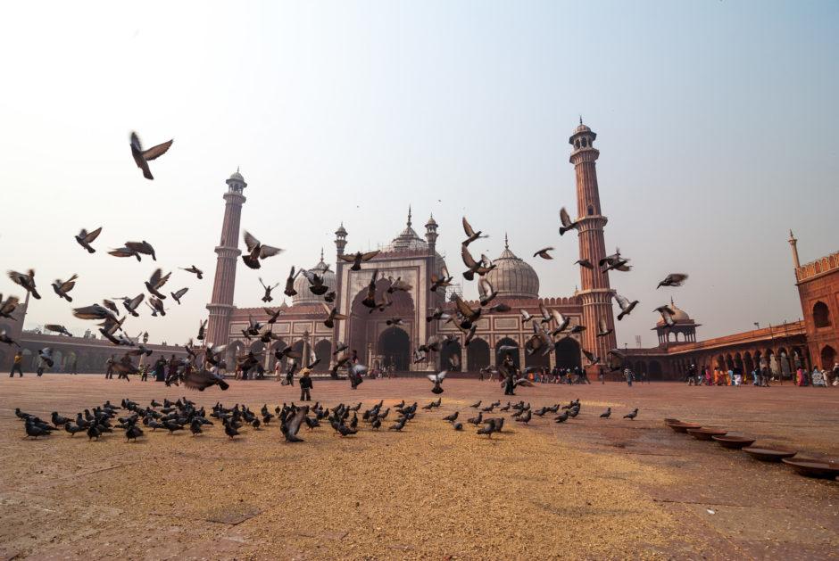 En Inde aussi, les pigeons font la loi