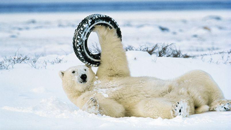 Un ours polaire sur le dos en train de jouer avec un pneu - © National Geographic/Norbert Rosing