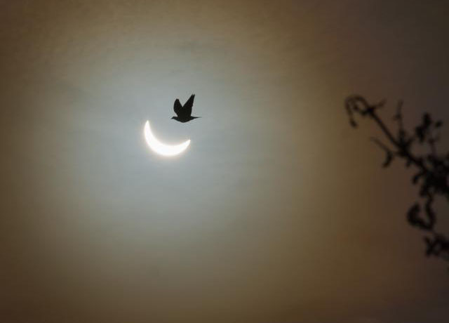 Amy Shore eclipse