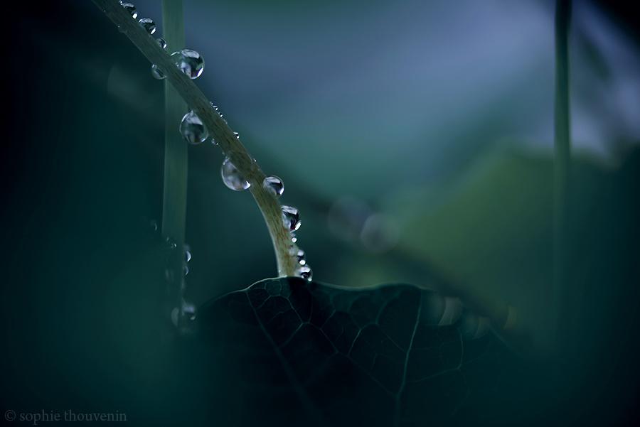 © Sophie Thouvenin