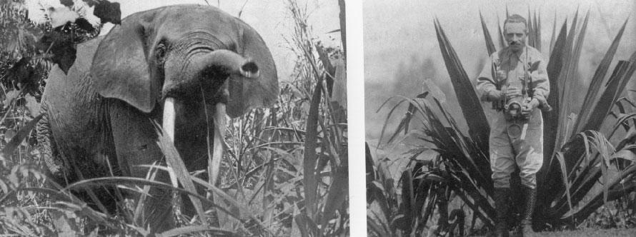 """Photos issues du livre """"Les pionniers de la photographie animalière"""""""