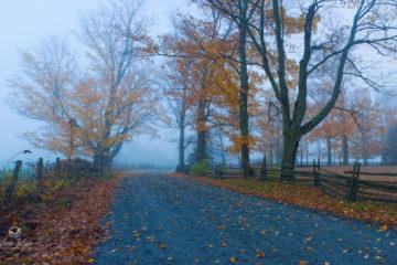 À la chasse du mauvais temps | Brume