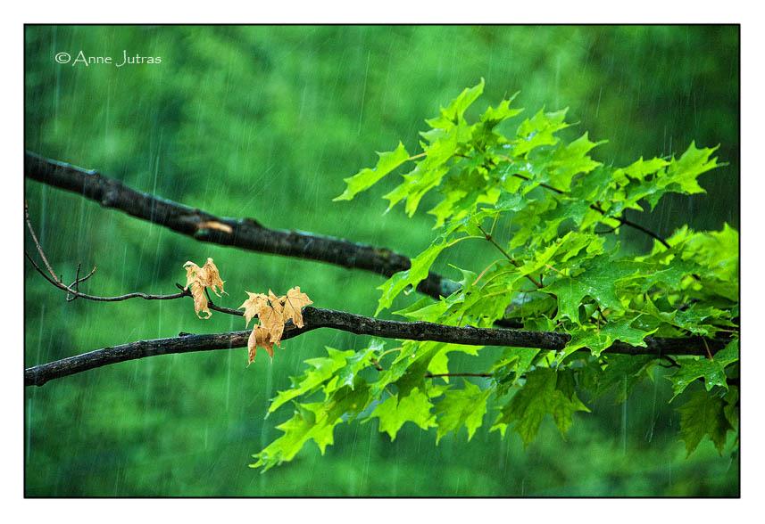 À la chasse du mauvais temps | Pluie