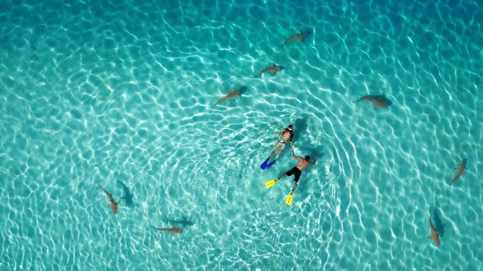 1er prix - catégorie Nature - © Tahitiflyshoot