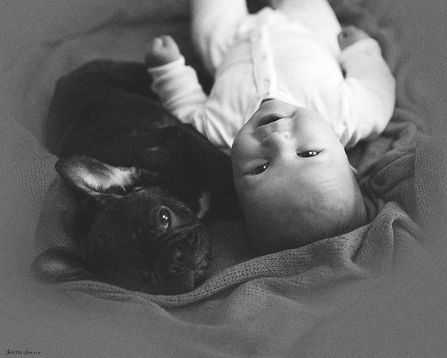 Ivette-Ivens-Bulldog-Baby_3