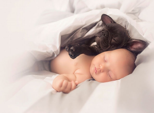 Ivette-Ivens-Bulldog-Baby_4