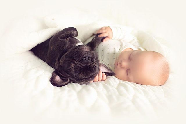 Ivette-Ivens-Bulldog-Baby_5