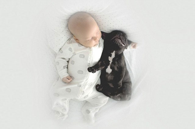 Ivette-Ivens-Bulldog-Baby_9
