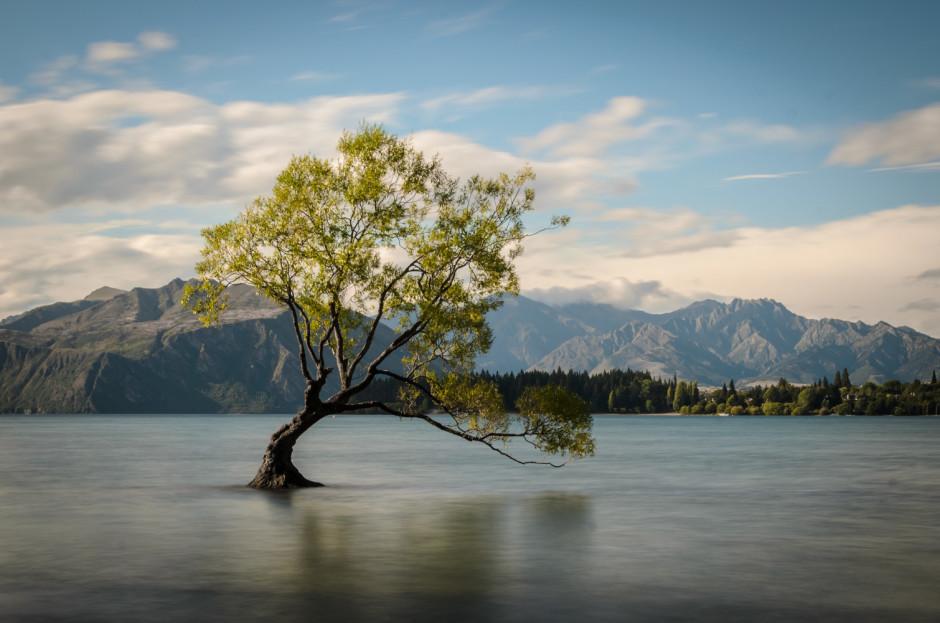 © Youenn Hazo - l'arbre de Wanaka sur l'île du Sud de Nouvelle Zélande