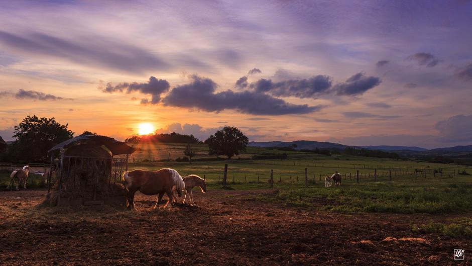 © Laurent Farges - Sunset dans le Beaujolais