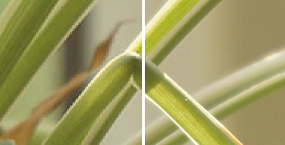Détail à 100% d'une image simulée à 72 dpi sur la gauche et à 300 dpi sur la droite