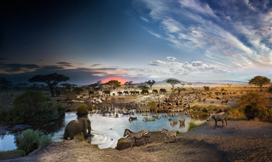 phototrend stephen wilkes 2200 photos 26h montage day to night savane tanzanie