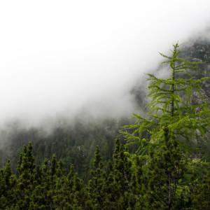 La brume se rapproche