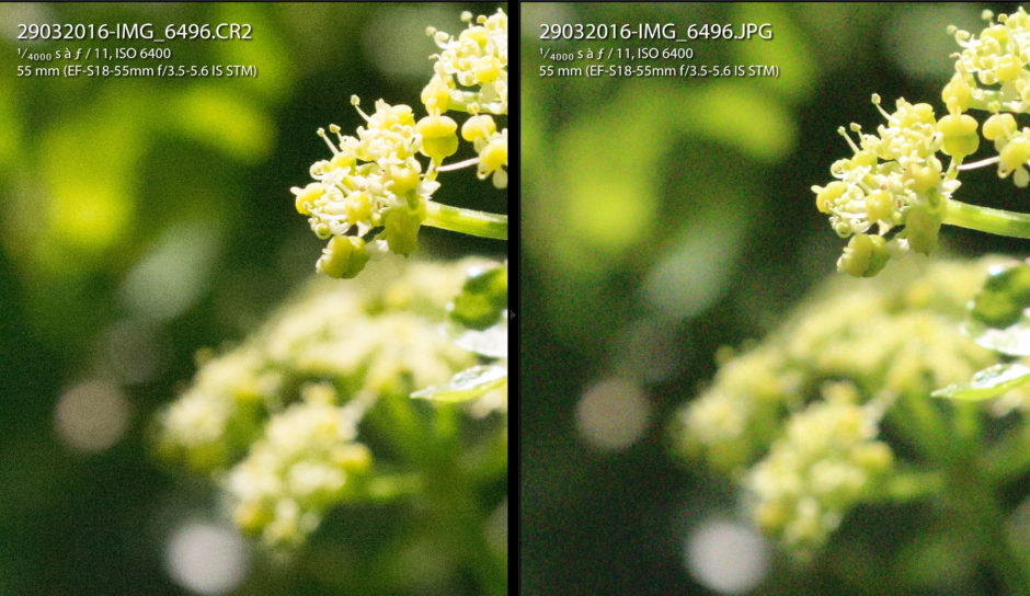 Comparaison ISO 6400 JPG vs RAW