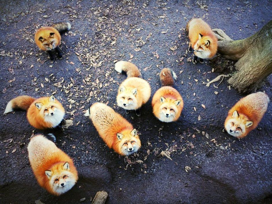 "© Erica Wu, 1st Place ""Animals"""