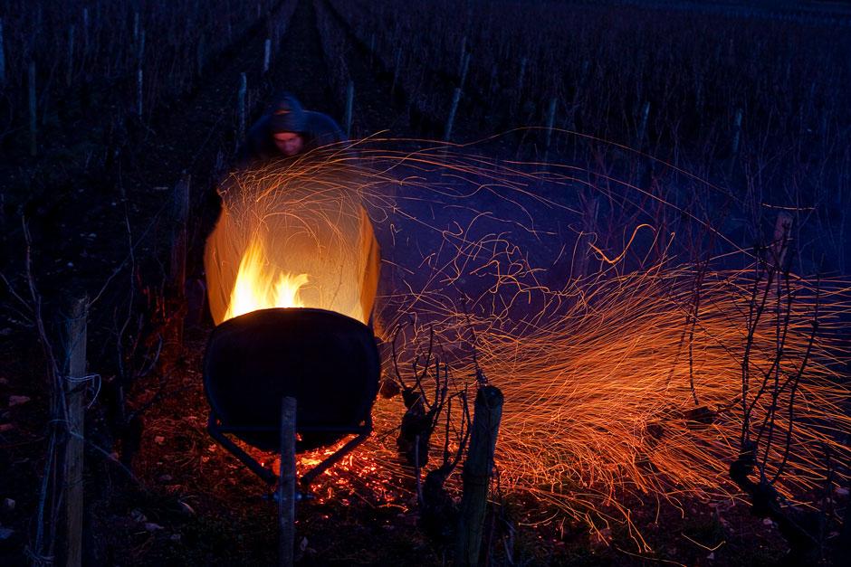 Taille, à Chassagne-montrachet par Didier Larue, Domaine Larue, à Saint-Aubin, à la tombée de la nuit. - © Thierry Gaudillère