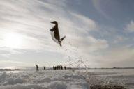 """© Vincent Munier - """"Antarctica, sur les traces de l'empereur"""" par Jérôme Bouvier - Arte"""