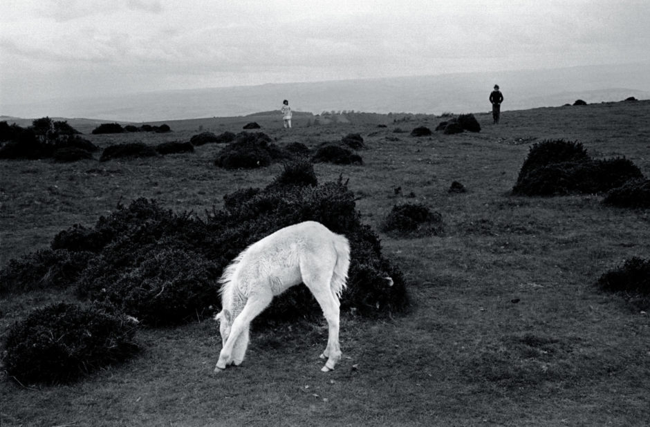 "© David Hurn - Magnum Photos - ""G.B, Wales, Brecon Beacons - Wild pony colt - Cold tourists in the rain in the background, 1974"""