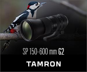 Tamron 150-600 oiseau 300×250