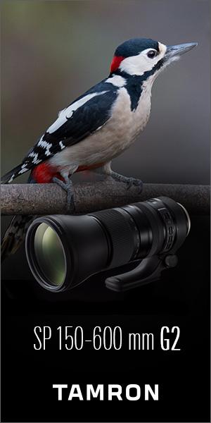 Tamron 150-600 oiseau 300×600