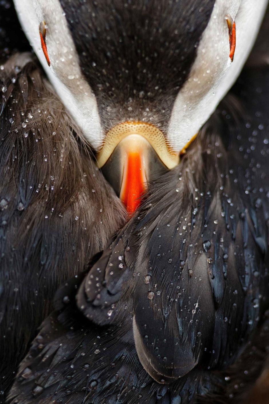 GRAND PRIX CONCOURS PHOTO ©Mario SUAREZ PORRAS