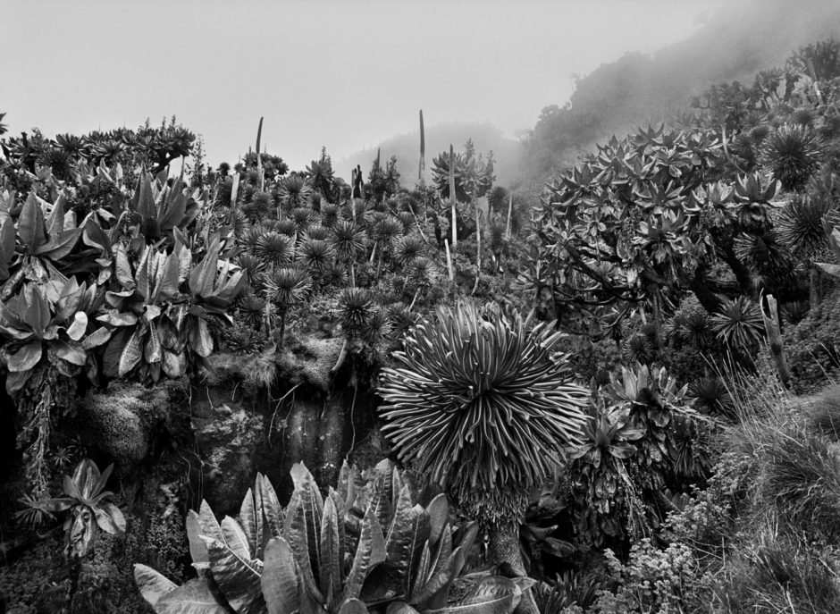 "© Sebastião Salgado - ""Jardins Naturels"" - Château Palmer - Original : Genesis (2013)"