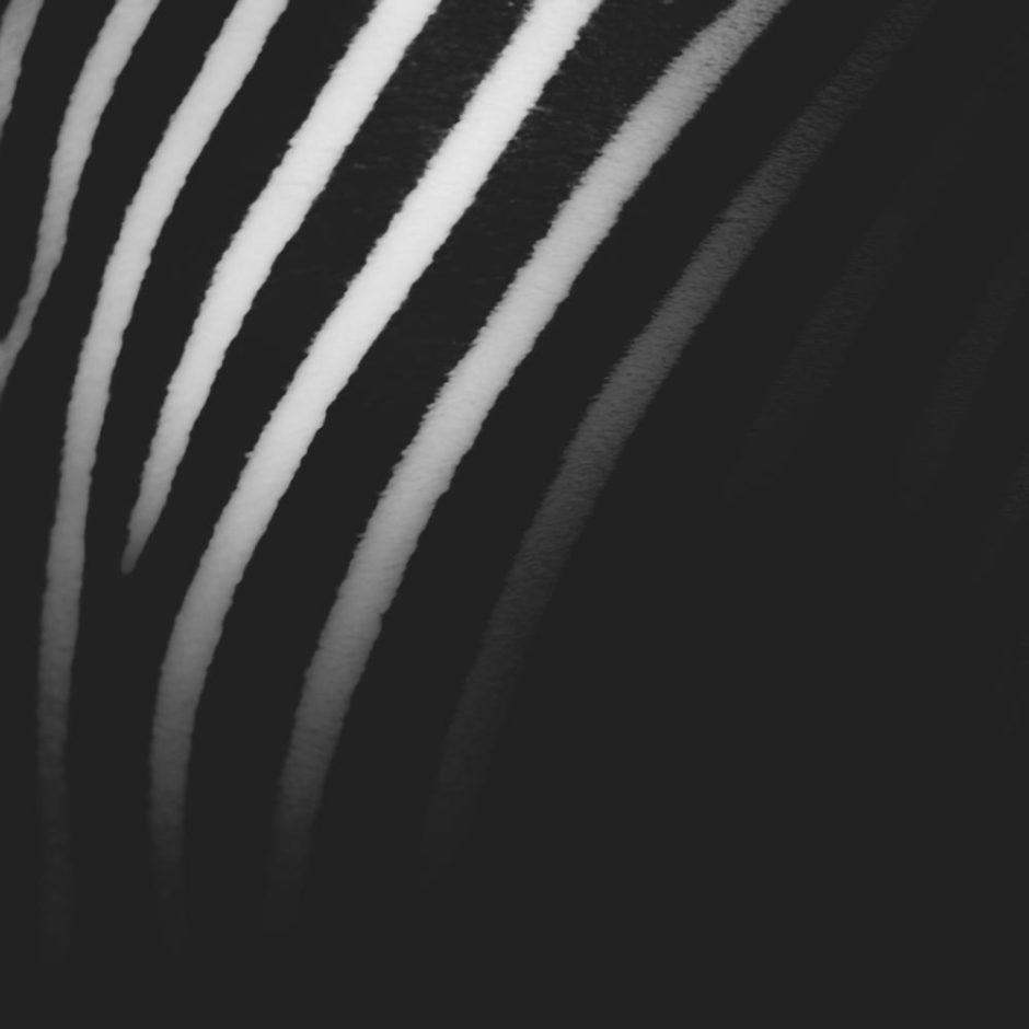"""© Rémy Sendra - """"Zebra"""""""