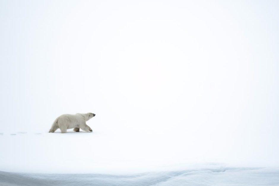"© Franck Maillard - ""Alone"""