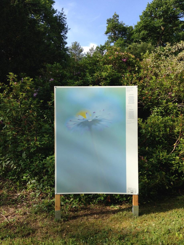 """Exposition """"Les floraisons cachées de l'Arboretum"""" par Myriam Dupouy"""