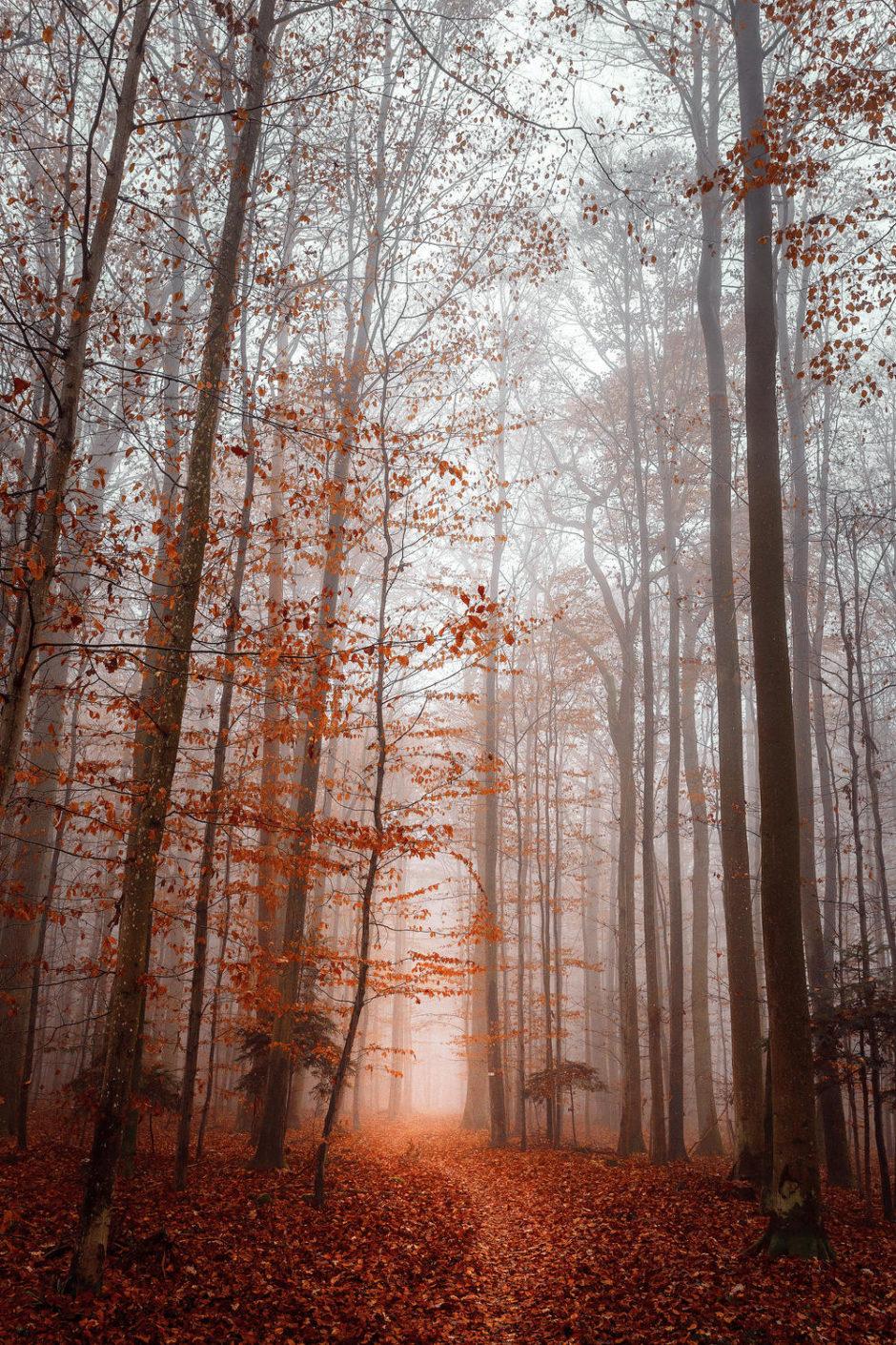 "© Nadine Jockers - ""Levé de brume"""