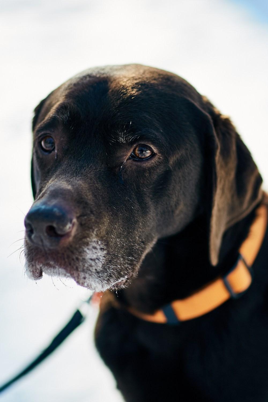 Doggy Styles - Anni et Miri