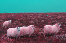Dreamscape of Iceland © Alejandro Medrano Fernández