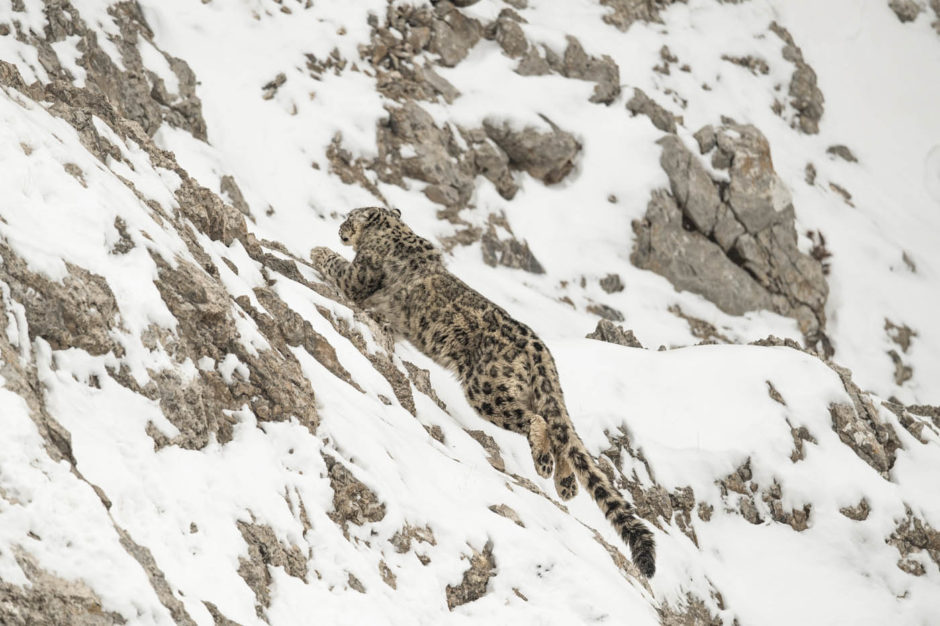 Les Sentiers de la Photo Vincent Munier