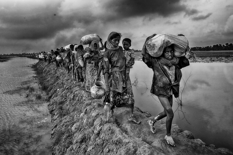 Les Rohingyas marchent à travers la rizière après avoir franchi la frontière à Lomba bill, Cox's Bazar au Bangladesh © Mushfiqul ALAM