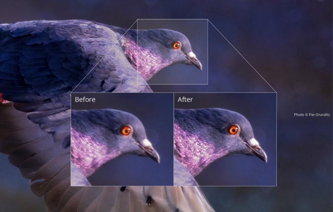 Test de Topaz Sharpen AI : l'intelligence artificielle au secours de vos photos floues
