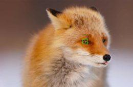 Sony Eye AF Animaux
