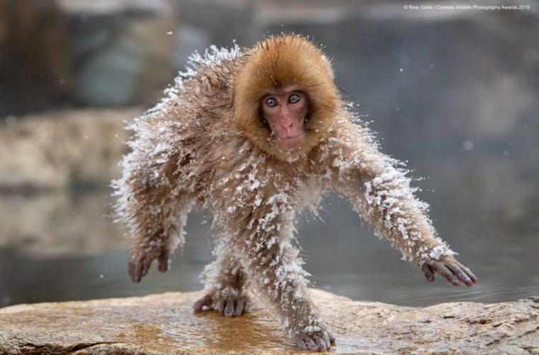 Comedy Wildlife Photography Awards Votez Pour La Photo Animaliere La Plus Drole