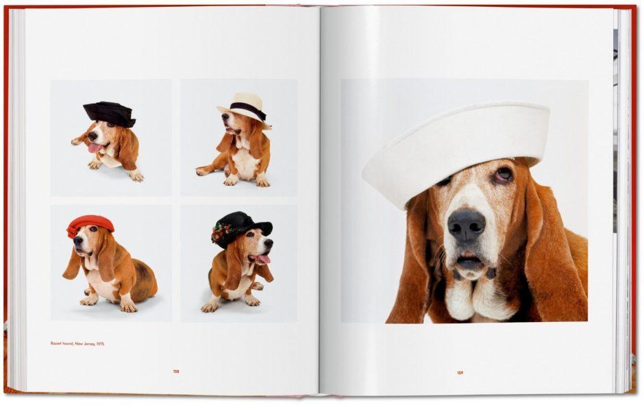 Dogs Walter Chandoha