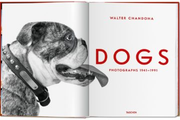 Dogs Walter Chandoha