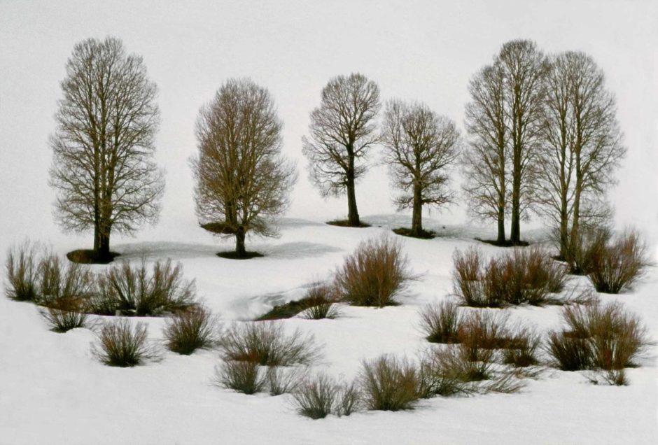 Frank Horvat 1978-nevada-usa-aspen-trees-in-snow-940x636