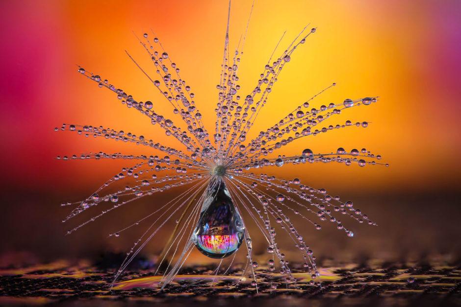 Little Dandelion umbrella by Petra Jung, CEWE Photo Award, Category winner Nature