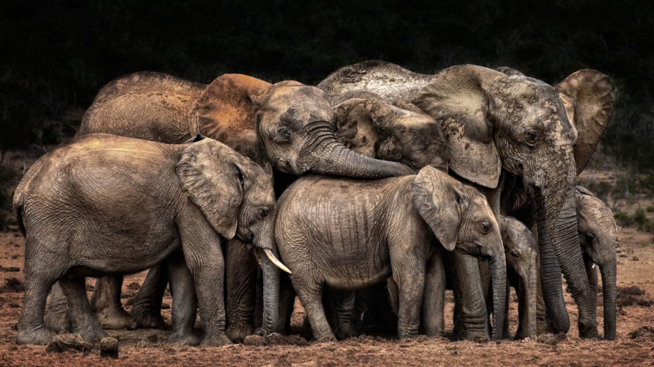 The Clan cuddles by Josef Schwarz, CEWE Photo Award, Category winner Animals