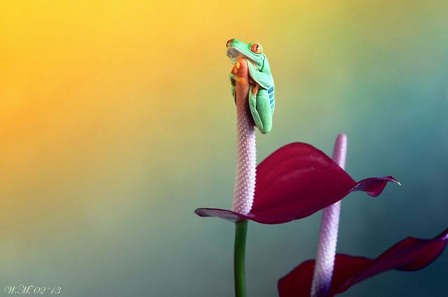 frogs-macro-photography-wil-mijer-16