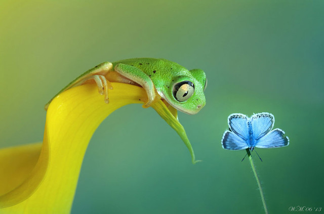 frogs-macro-photography-wil-mijer-17