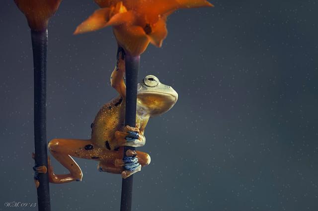 frogs-macro-photography-wil-mijer-20